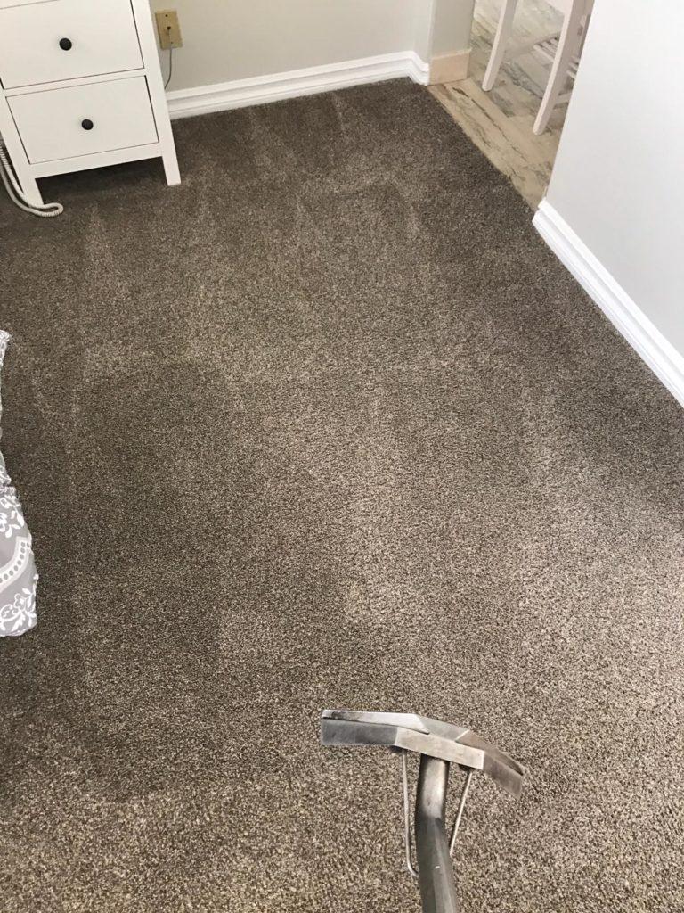 Blog Newport Coast Carpet Cleaners